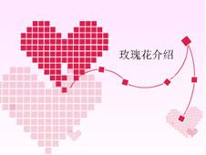《玫瑰花介绍》多媒体演示文稿